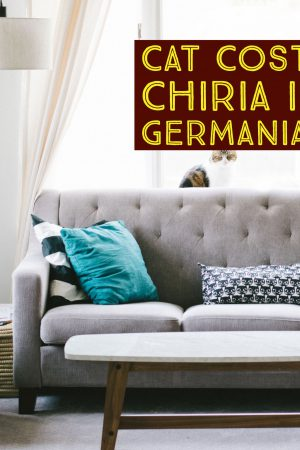 Cat costa chiria in Germania